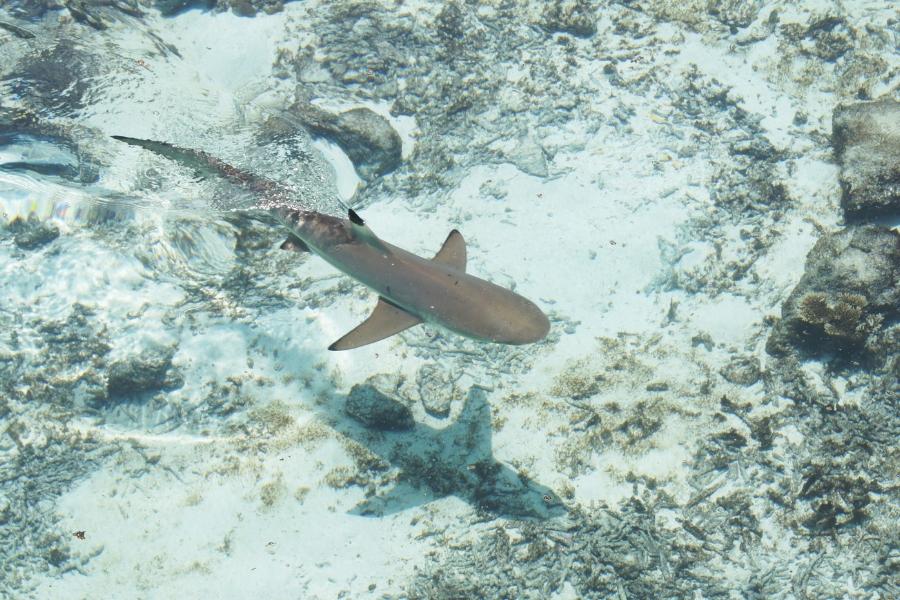 Sharks While Kayak Fishing